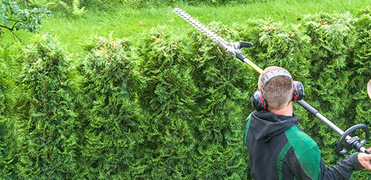 gardener trimming hedge