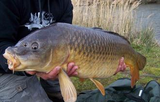 Rosewall coarse fishing