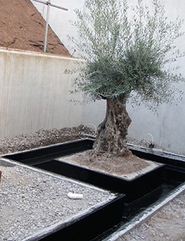 water feature with olive tree