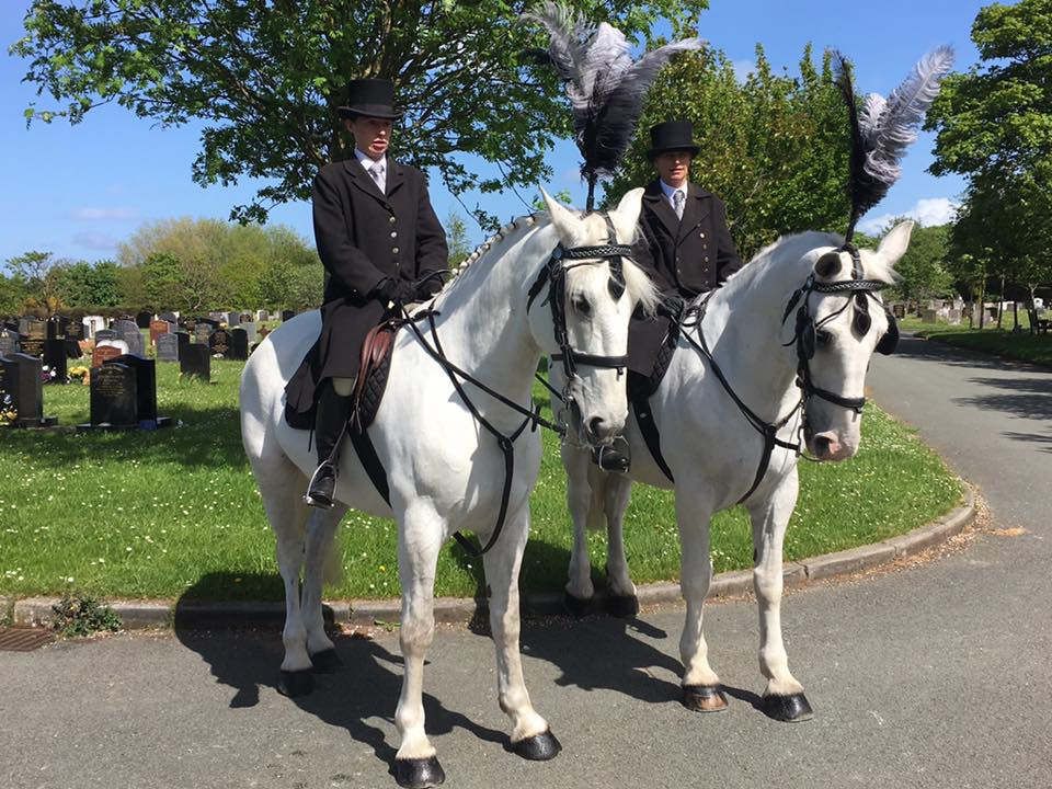 pair of white outriders for a horse drawn funeral