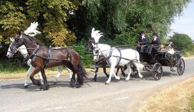 team of domino horses pulling a wedding carriage