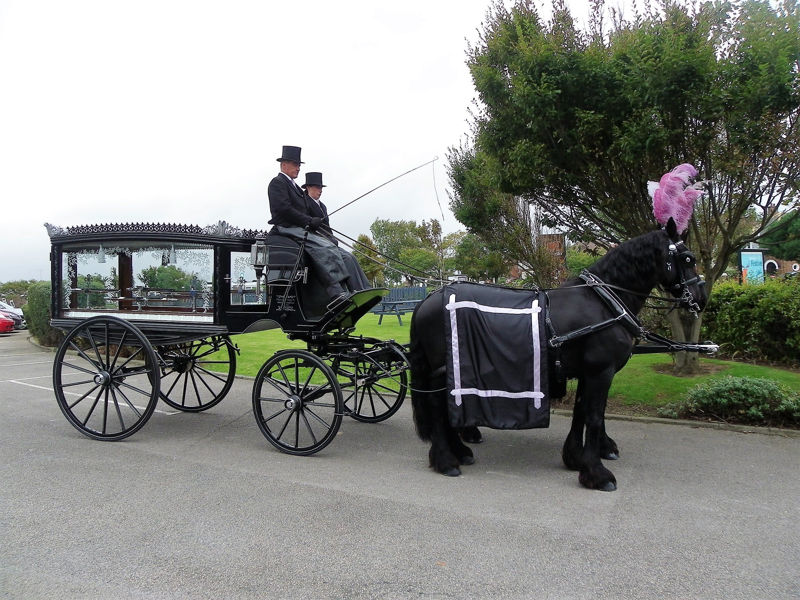 black horse drawn funeral hearse with black horses and lilac plumes and drapes