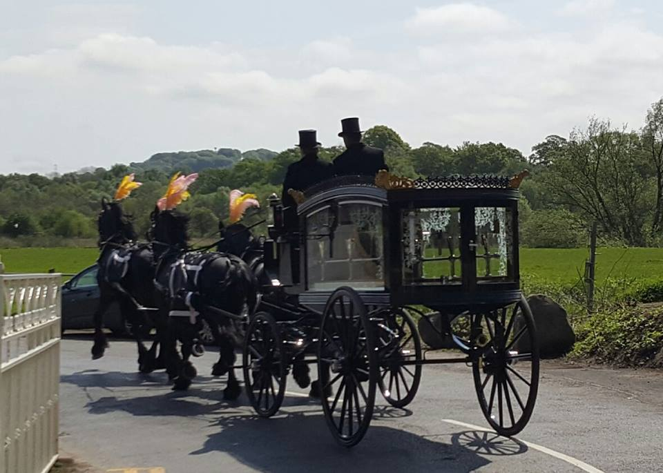 horse drawn funeral hearse drawn by black friesian horses