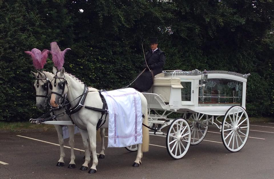 white horse drawn funeral hearse with lilac drapes