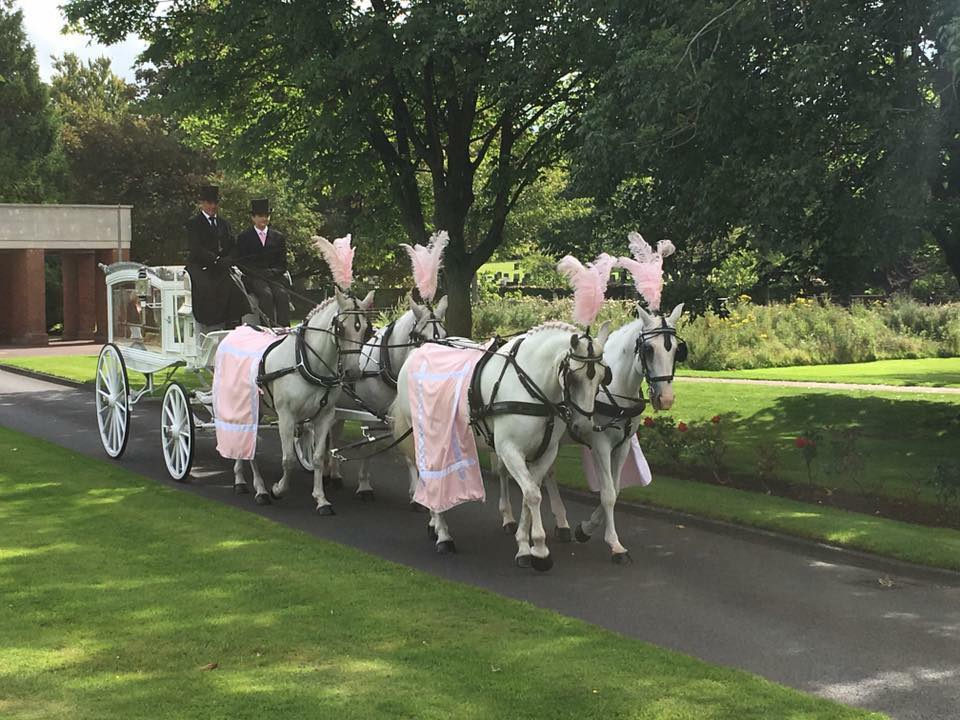 horse drawn funeral hearse with a team of white horses
