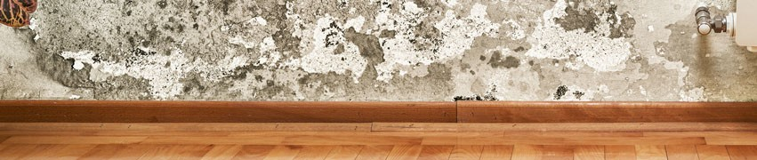 Why Rising Damp Can Be a Problem