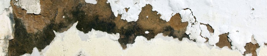 How to Identify Rising Damp