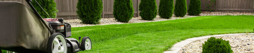 When to Weed and Feed Lawn