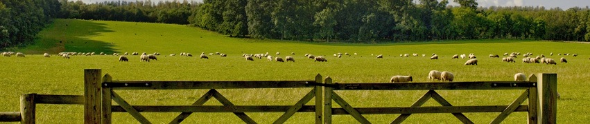 Fencing For Goats And Sheep