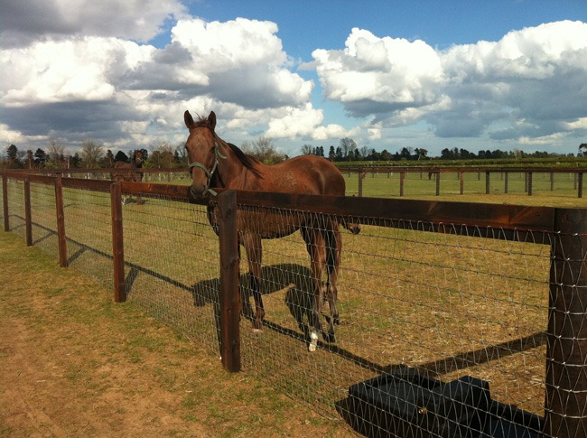 What Is The Best Type Of Horse Fencing