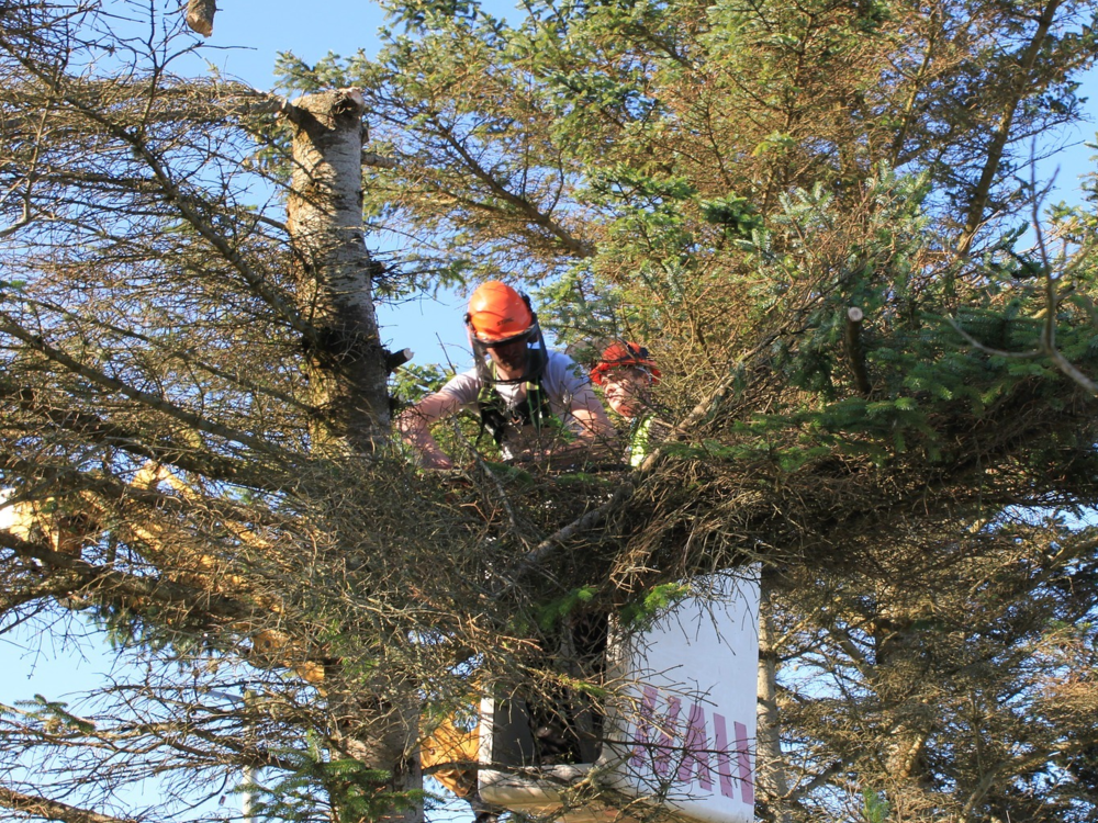 Tree shaping and pruning
