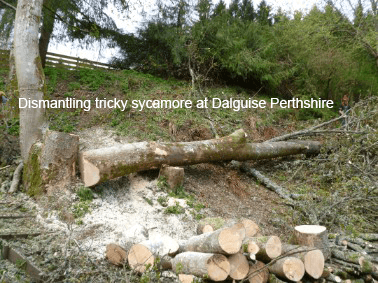 tree dismantling in dalguise perthshire