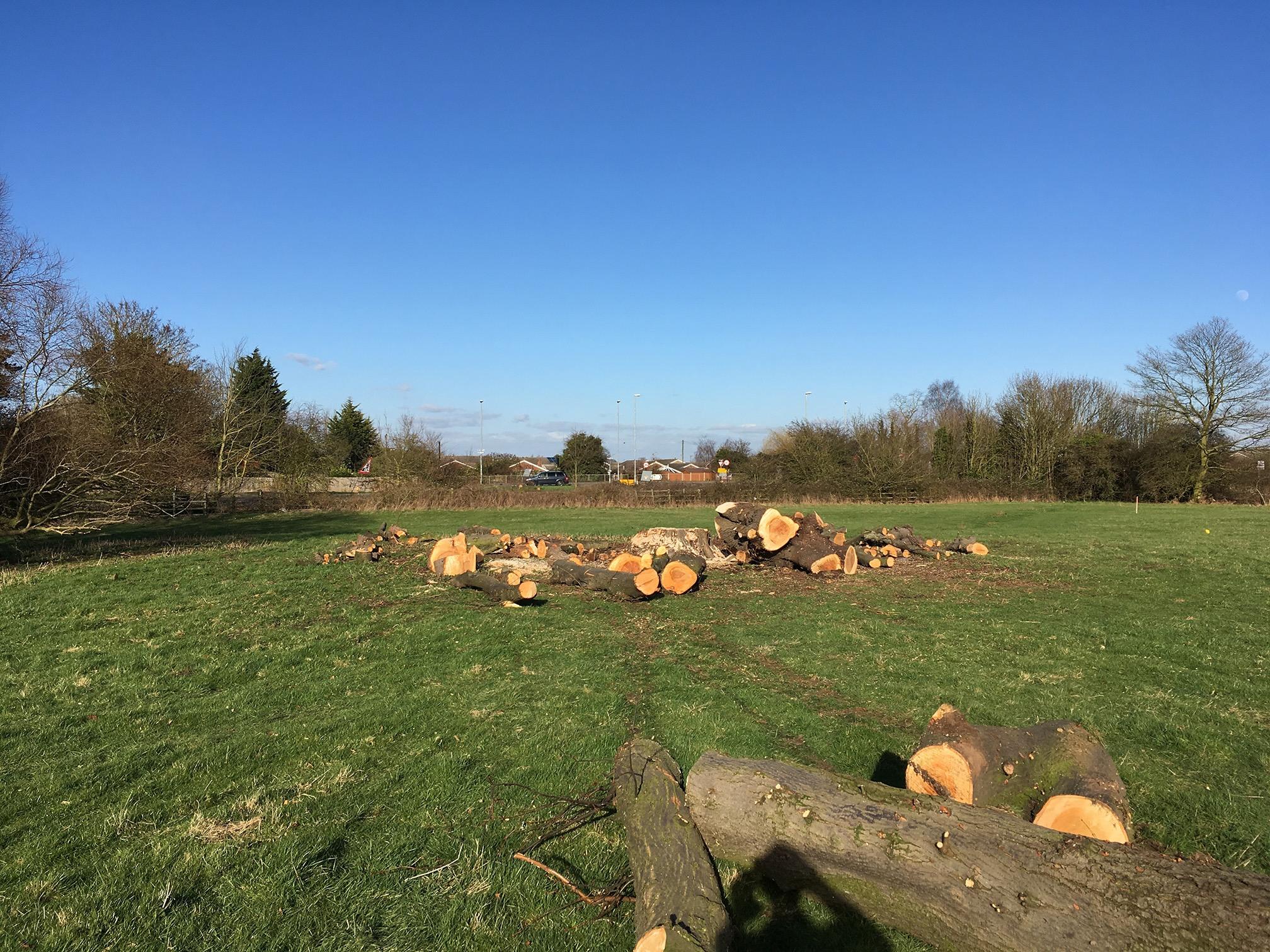 tree felling in northampton