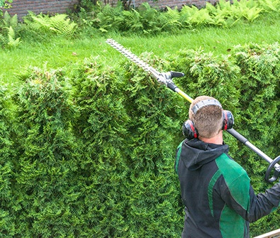 gardener pruning a hedge
