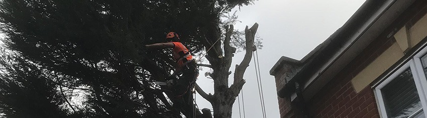 When should I consider Tree Topping