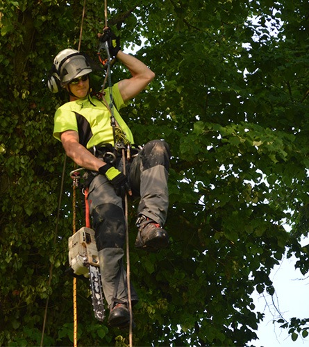 tree surgeon on height working equipment