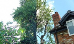 before and after tree pruning