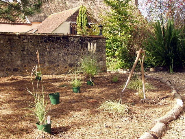 Planting grasses