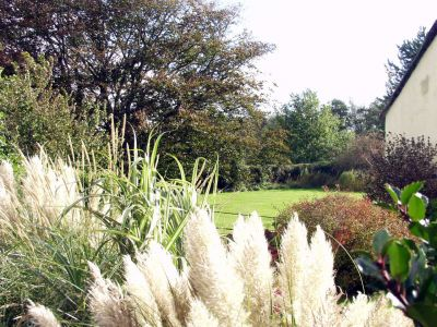 Grasses in our garden